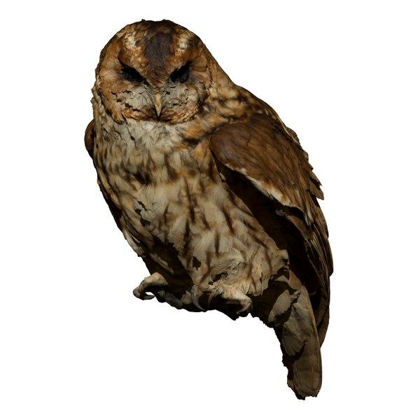 perched tawny owl taxidermy 3D model