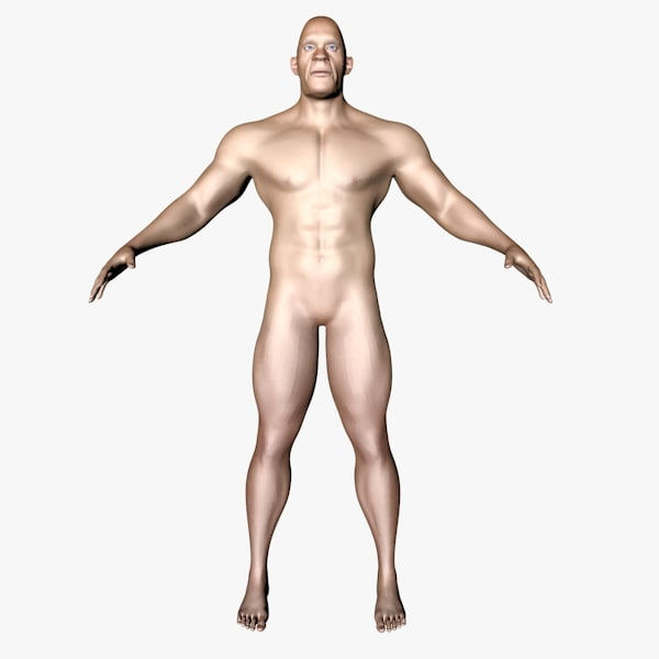body male 3D
