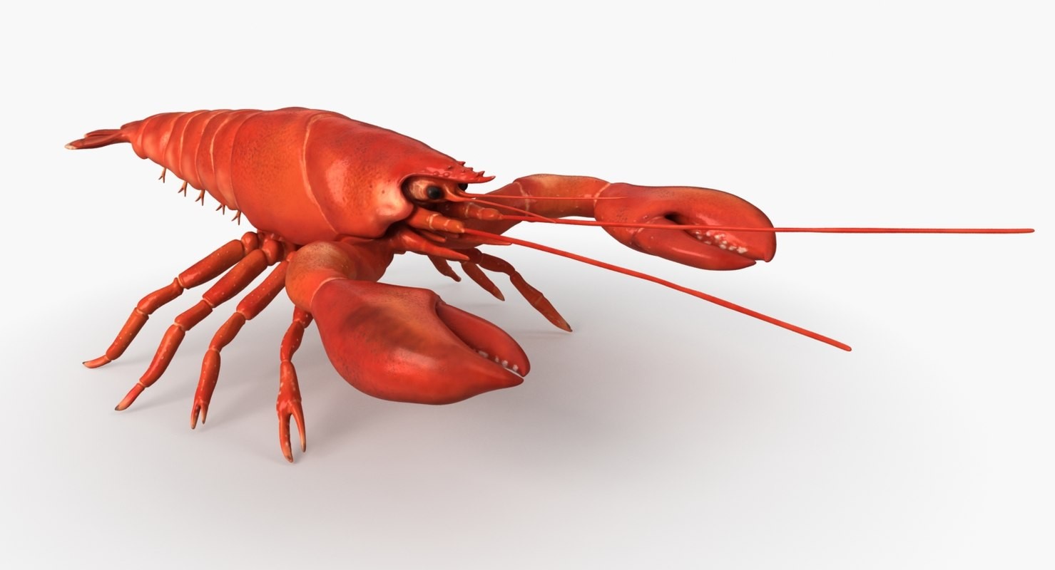 3D model lobster animation