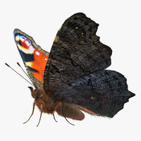 Peacock Butterfly or Aglais io with Fur 3D Model