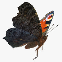 Peacock Butterfly Flying Pose with Fur 3D Model