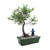 bonsai tree 3D