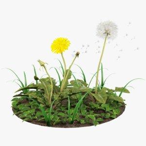 3D dandelions grass model