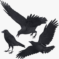 Crow 3 Poses