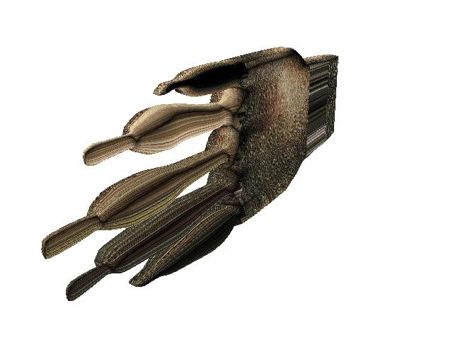 3D model hand