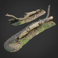 scanned nature forest roots 3D model