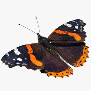 red admiral butterfly fur model