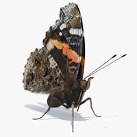 vanessa atalanta butterfly sitting 3D