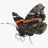 3D vanessa atalanta butterfly rigged model