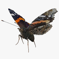 vanessa atalanta butterfly flying 3D model
