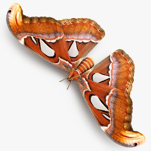 atlas moth 3D model