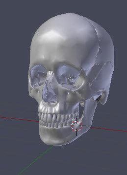 human skull 3D