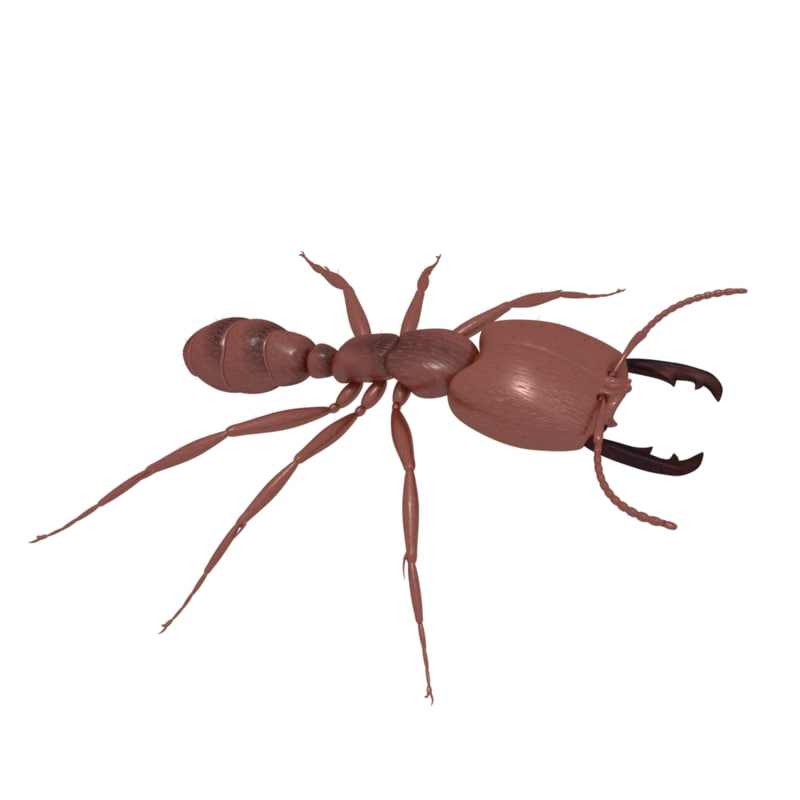 army ant soldier model