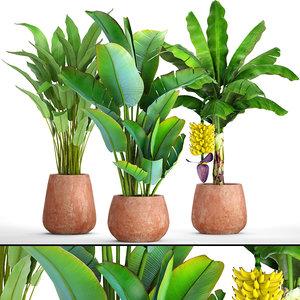 3D banana plants model