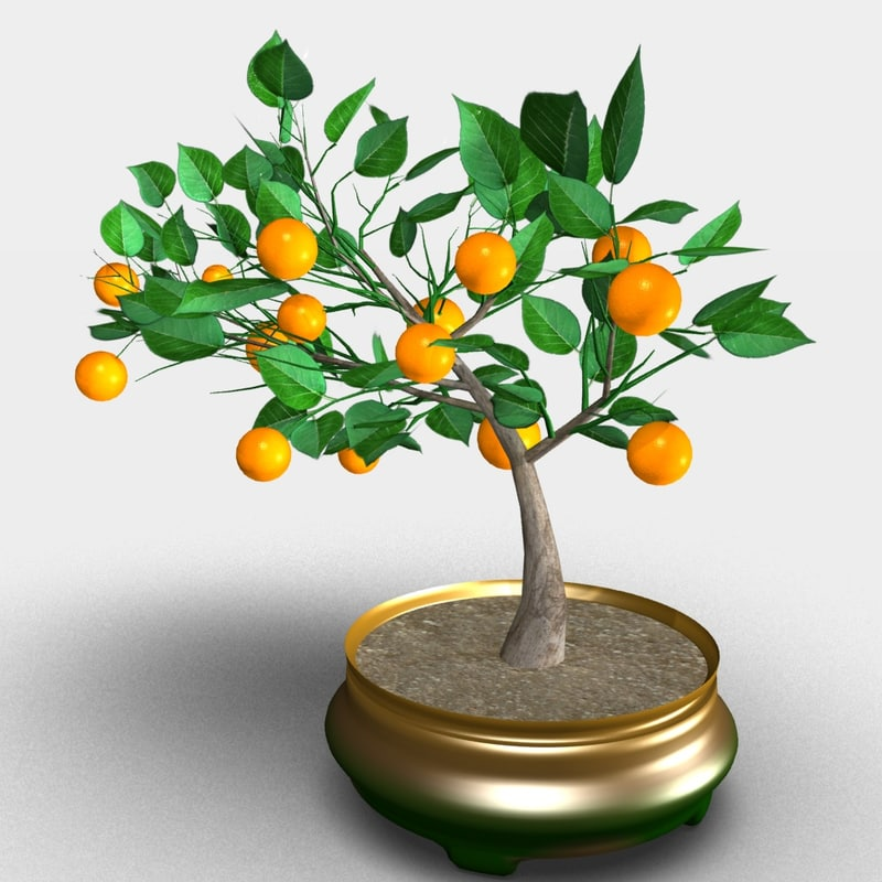 3D orange tree bonsai model