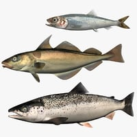 3D model set atlantic salmon herring