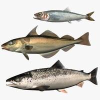 3D model set atlantic salmon herring