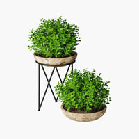 small plant 04