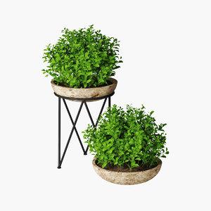 small plant pot 3D model