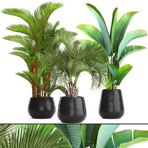 palms plants 3D model