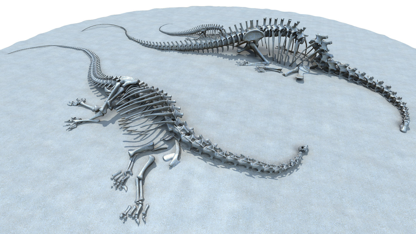 extinct diplodocus 3D model