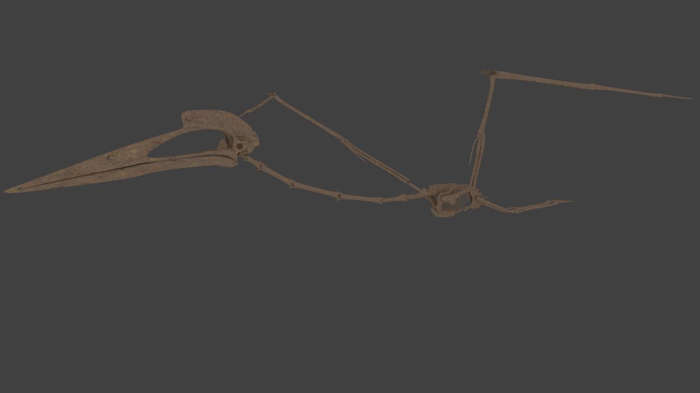 3D hatzegopteryx skeleton