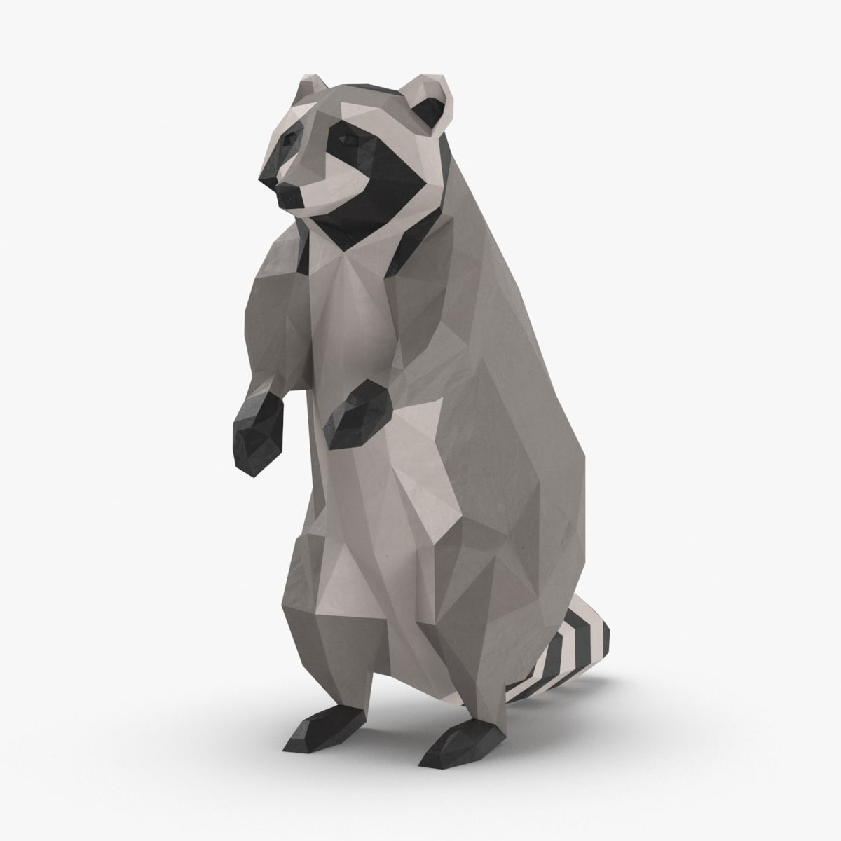 raccoon---upright 3D model