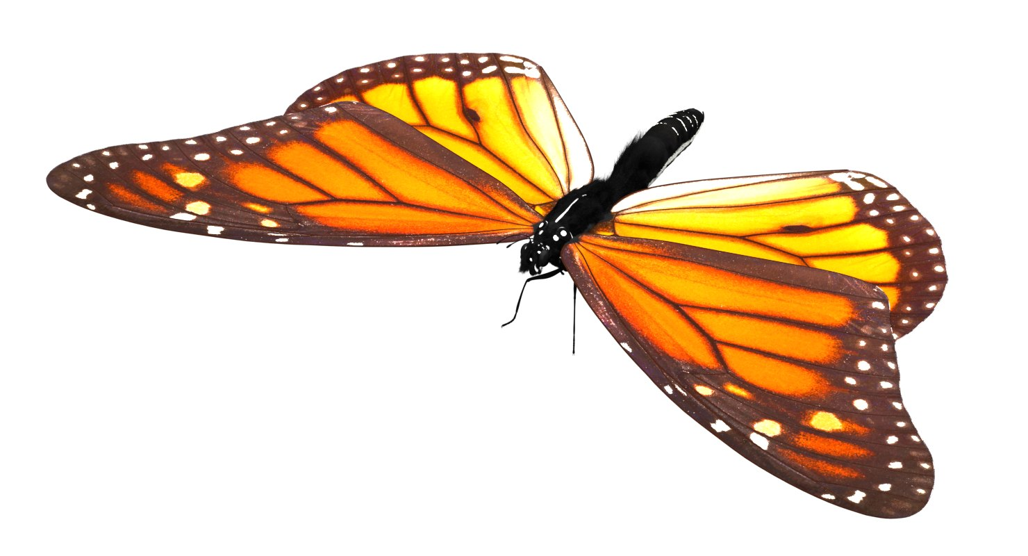 3D butterfly monarch model