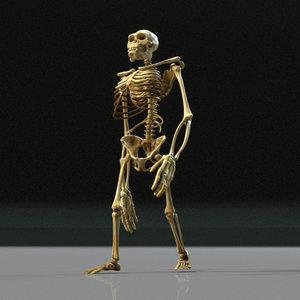 3D model kong skeleton