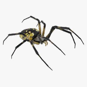 black yellow garden spider 3D model