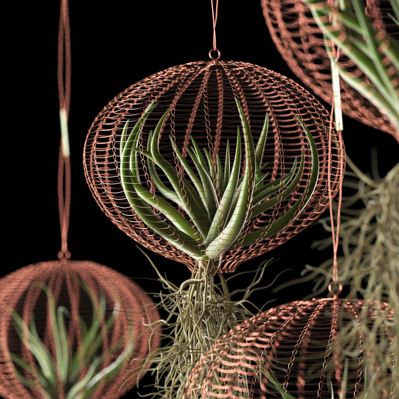 air plants wire baskets 3D