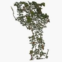 3D ivy