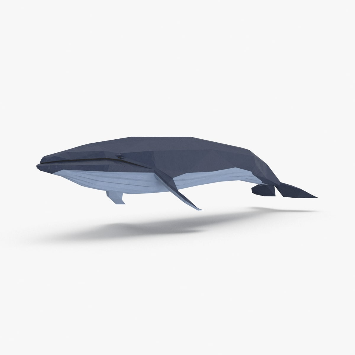 blue-whale---onward model