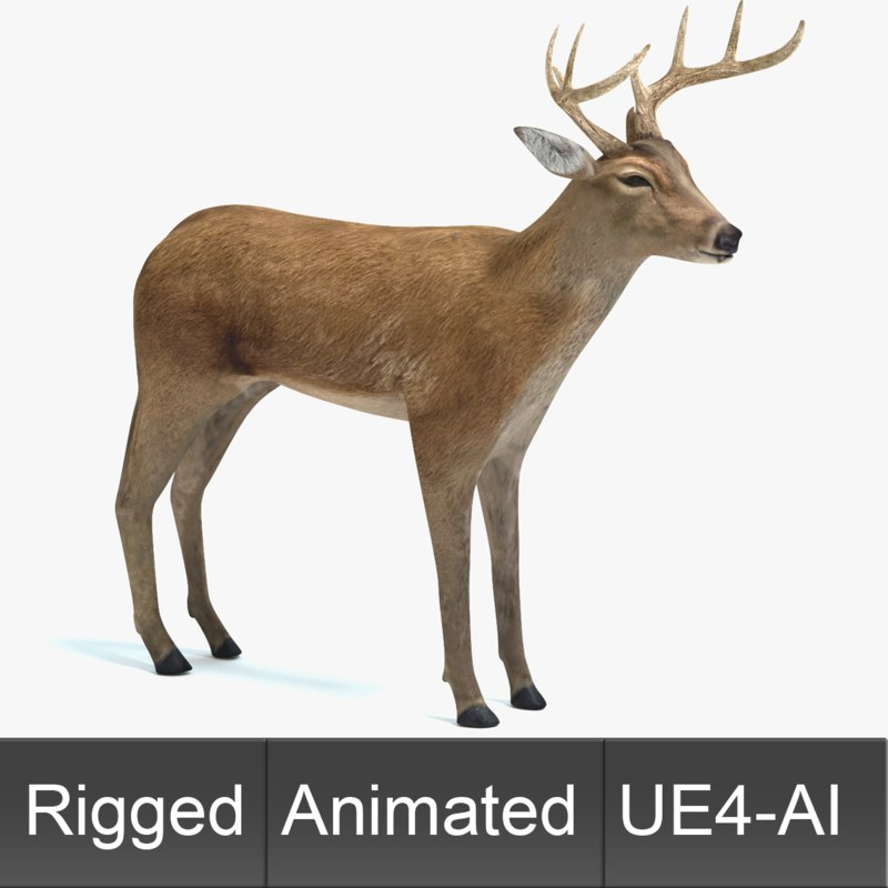 deer animations model