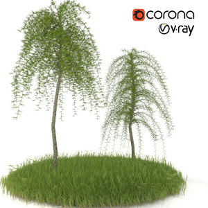 larch european pendula 3D model