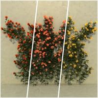 climbing roses 3D model