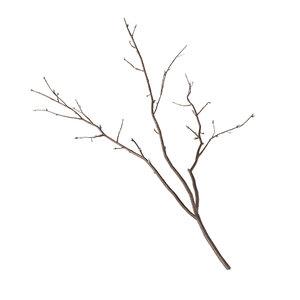 branch 3 3D model