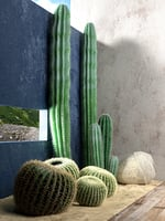 Saguaro and Golden Barrel Cactuses