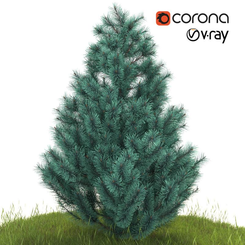 silver spruce 3D model