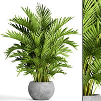 3D howea forsteriana palm model