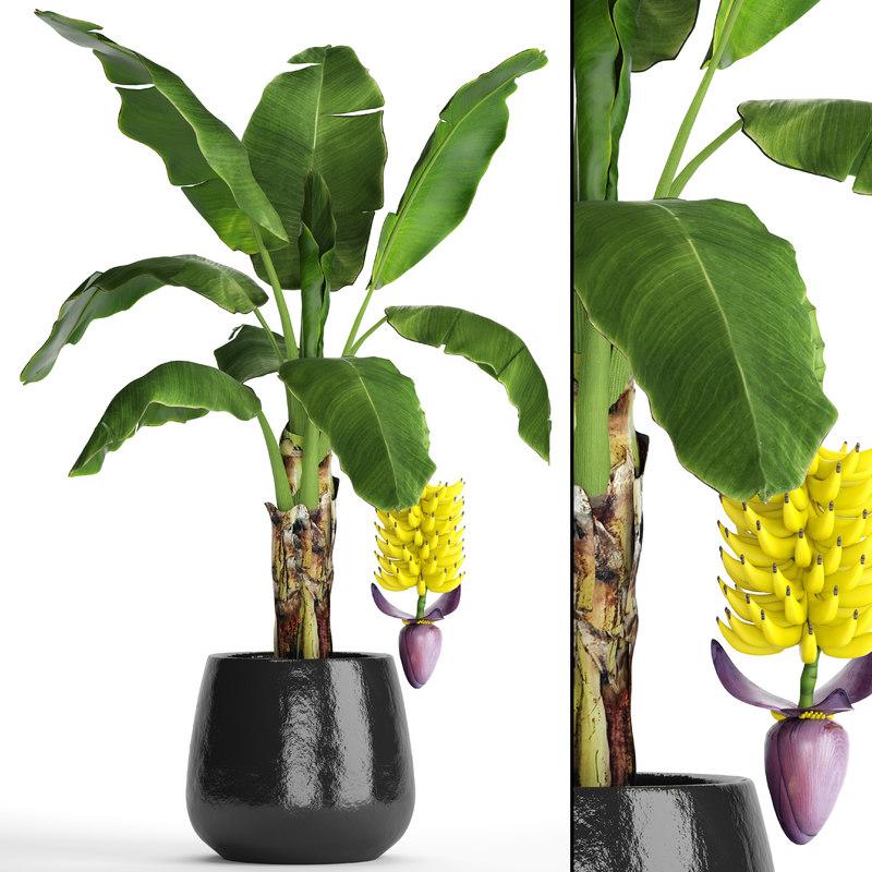 banana palm fruit 3D model