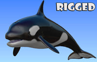 3D rigged orca