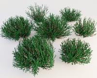 bushes 3D model