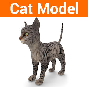 3D cute cat model
