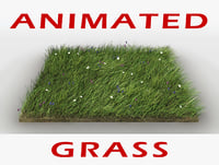Grass Animated