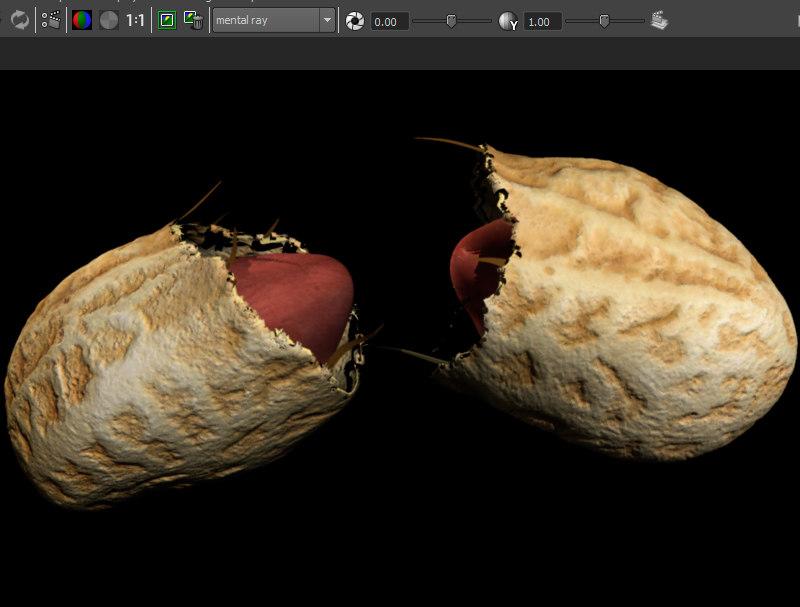 3D penaut shell