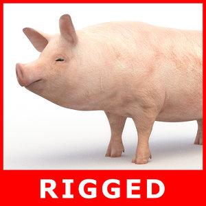 pig rigging 3D model