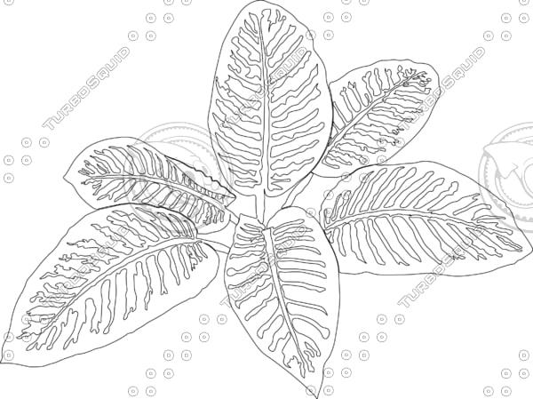 3D model dieffenbachia plant