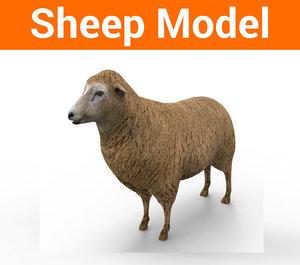3D model sheep