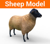 sheep low poly model